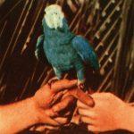 andrew-bird-album-rock